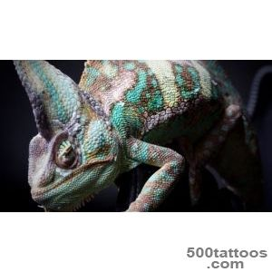 BitCoin Funders  Chameleon TattooBitCoin Funders_30