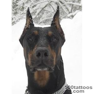 Pin Doberman I Know This One Is Kind Of Funky on Pinterest_47