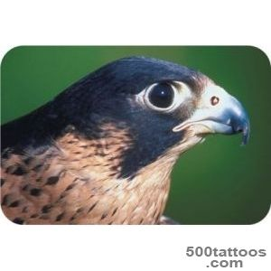 Meaningful Falcon Tattoo Ideas_40