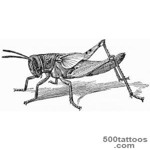 GRASSHOPPER PICTURES, PICS, IMAGES AND PHOTOS FOR YOUR TATTOO _32