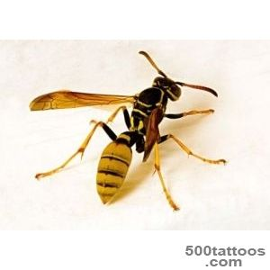 WASP PICTURES, PICS, IMAGES AND PHOTOS FOR INSPIRATION_23